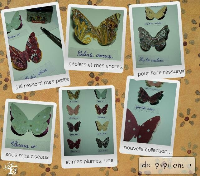 2013-10 papillons collection