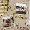 Un éléphant_le Pal