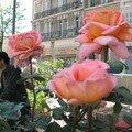 0263 - Roses oranger fête des fleurs 22 avril