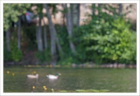 QM libell anax vol profil riviere canards 040611