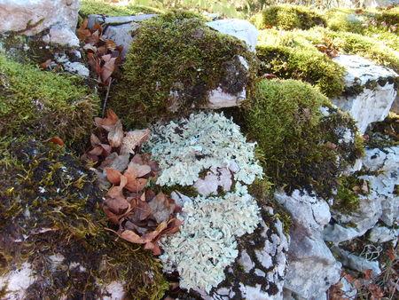 mur_avec_lichen
