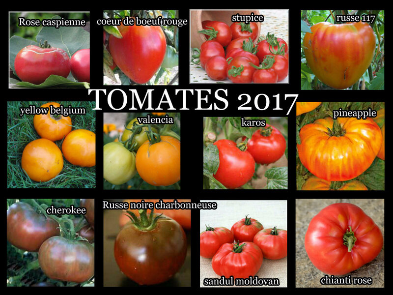 tomates 2017 2