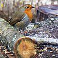 Oiseaux de décembre