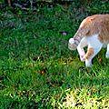 Chats, tigre et capucines au jardin