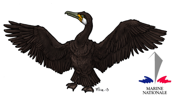 cormoradAFA