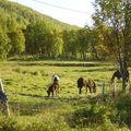 14-09-08 Sortie Velo Sjotun (35)