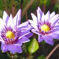 102 Les Belles Fleurs