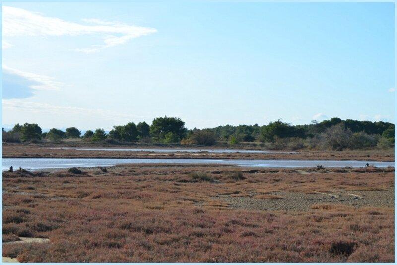 Les étangs d'Ayguarde