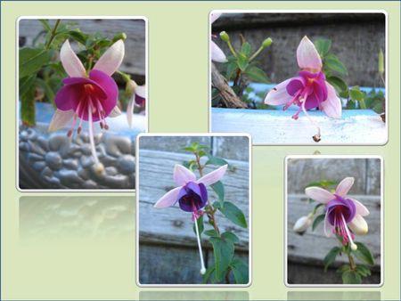 Fleurs 2009-2010 (19)