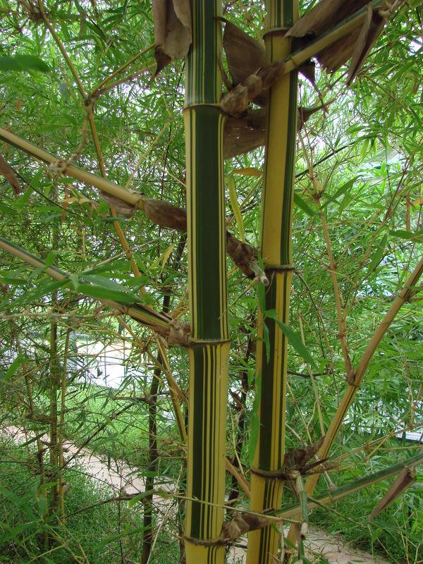 4 - le jardin de bambous du mont fuji