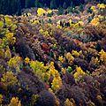 Feu de forêt (3)