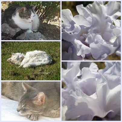 Cats & garden (3)