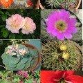 ...fleurs du jour