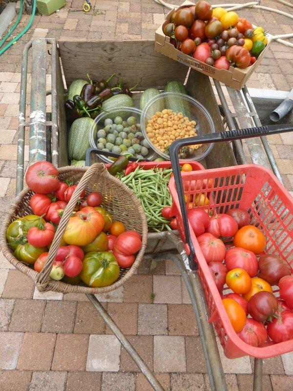 28-récoltes du jour- (2)