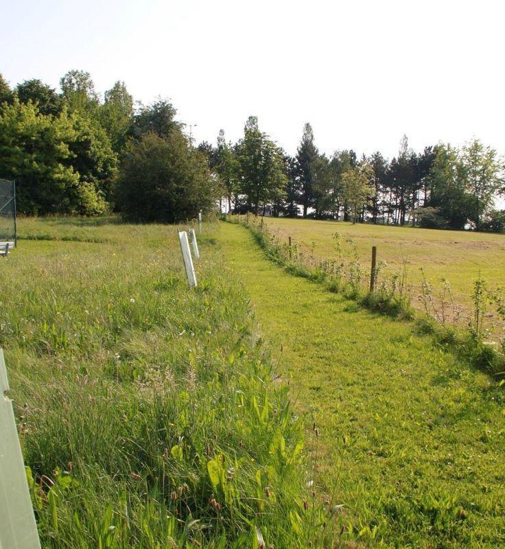 La gestion diff renci e des espaces verts termes for Gestion des espaces verts