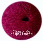 dolce_champ_de_coquelicots_copie