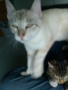 nouveaux_mi_ni_cats_4