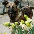 2008 04 10 Kapy devant les fleurs