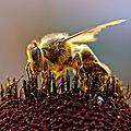 L'hostel aux mouches : les abeilles