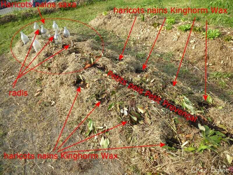 Potager permaculture 2e plnatations 02