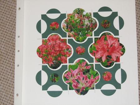 L_azal_e_de_mon_jardin
