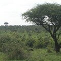 Savane