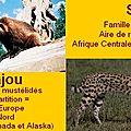 Carcajou-Serval