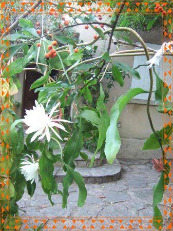 fleursau_matin