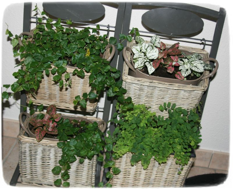 Plantes d 39 int rieurs photo de d co d 39 int rieur les for Porte plantes dinterieur