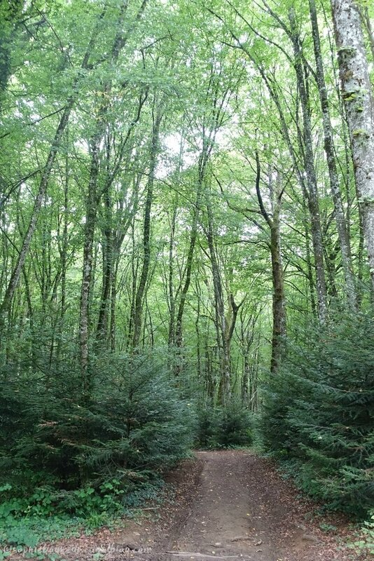 J7 Croix forêt
