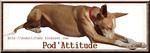 Podatitude_blog