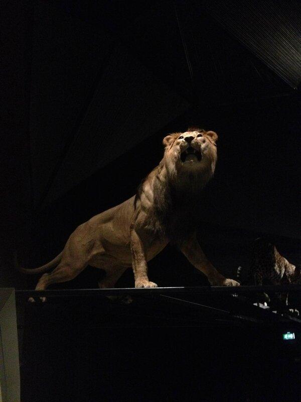 10-ouverture musee des confluences-Lyon