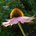 Fleur au soleil