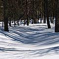 Des vagues des mélèzes et des ombres Hautes-Alpes SuperDevoluy - Paysage neige