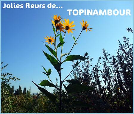 fleur_topinambour