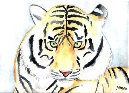 1-tigre dessin 003