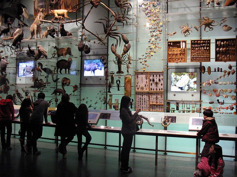 800px-American_Museum_of_Natural_History_Biodiversity_Hall_anagoria
