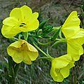 Fleurs et fruits de Léon 200816