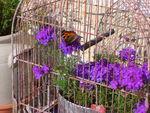 ma_cage_a_oiseau