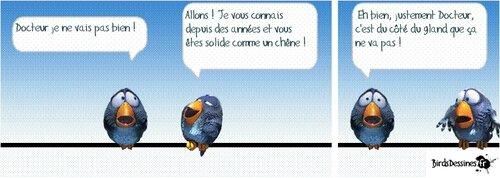 oiseaux 08
