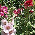 Les fleurs de mon