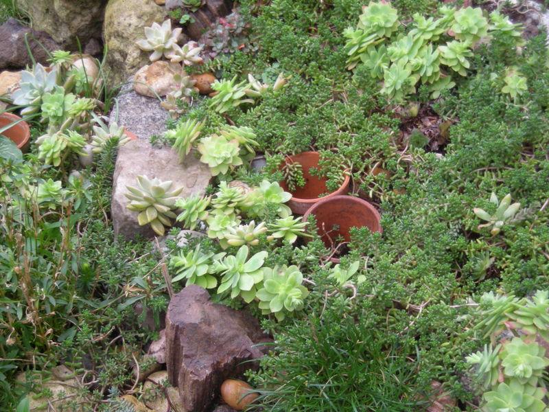 Plante grasse de jardin plante grasse de jardin plante for Plante grasse pour exterieur