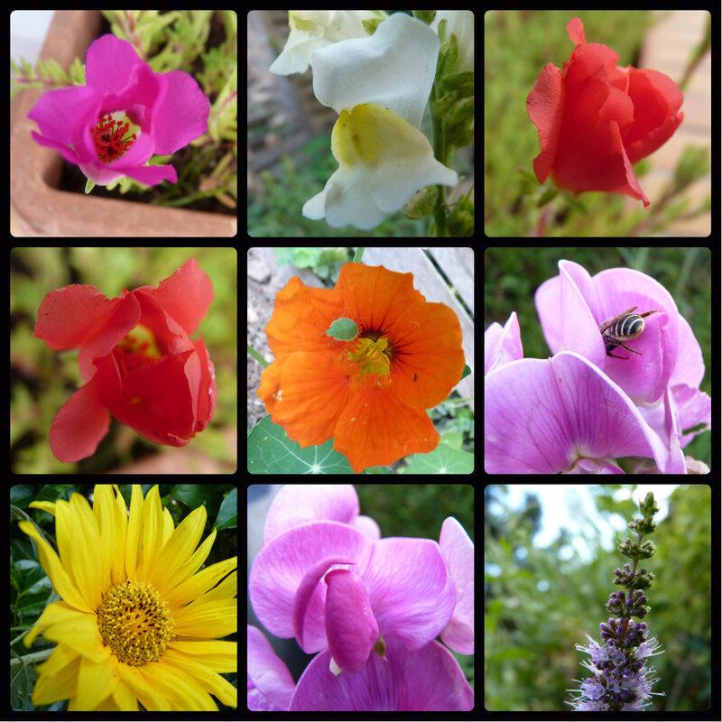 1 mosaique fleurs