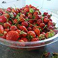19 juin - fraisiers ressucités....des fraises pour tout l'été