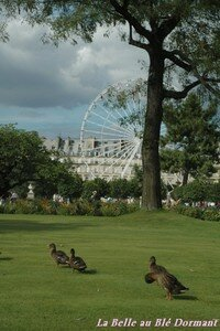 Canards_tuileries