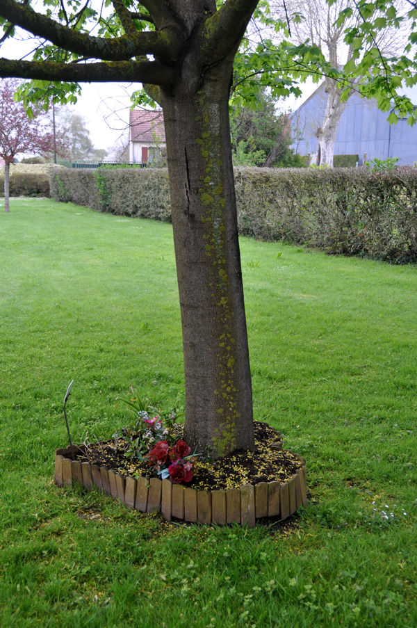Arbre_parterre_de_fleurs_coeur