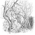forêt3