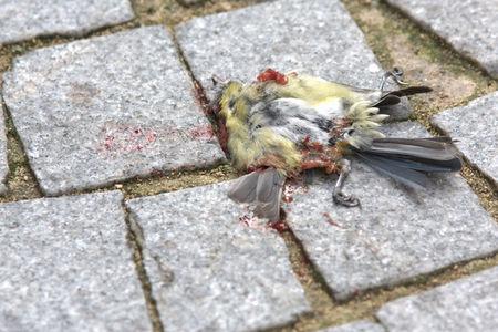 oiseau_mort