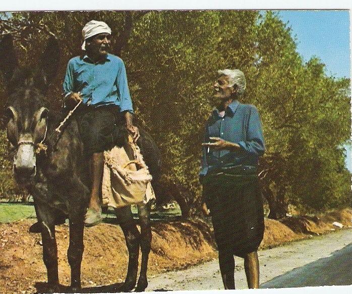 Un âne à Chypre - 4