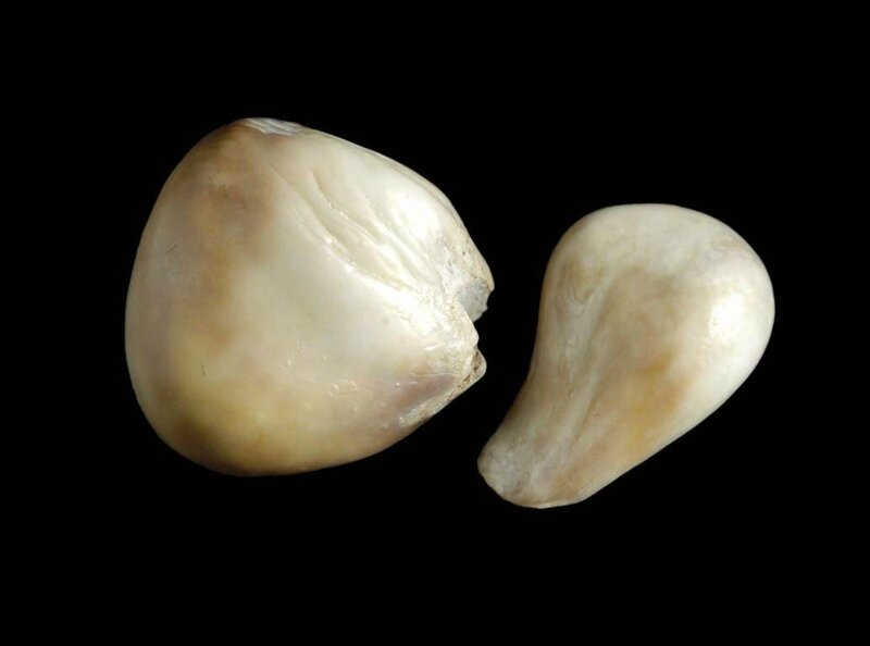 Two Pearls, Margarita Shipwrec, 1622